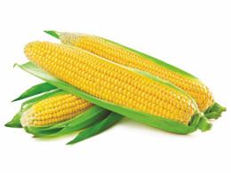 Kukurydza konserwowa Food Garden 2950 g/1840 g